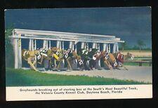 Dog Racing GREYHOUNDS Volusia Kennel Club Daytona Florida USA PPC c1940/50s?