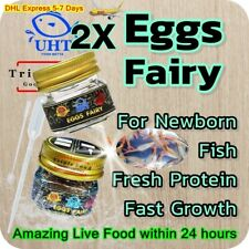 2X Fairy Eggs for Newborn Fish Fresh Protein Fast Growth Amazing Live Food