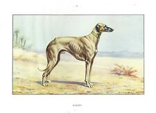 1930 Art Watercolor Francois Castellan France Dog Portrait Print SALUKI SLOUGHI