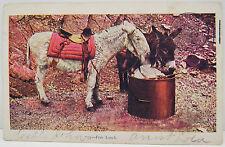 USA Postkarte Ansichtskarte AK - Esel - RPO 1905 Franklin 1c Series 1902 (A2350