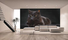 Black Cat   Wall Mural Photo Wallpaper GIANT DECOR Paper Poster Free Paste
