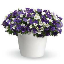 25 Trixi Combo Sky'S The Limit Live Multi 3 Plants 1 Plugs Diy Planters D10002