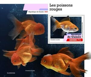 Guinea Fish Stamps 2020 MNH Goldfish Fishes Domestic Animals Pets 1v S/S