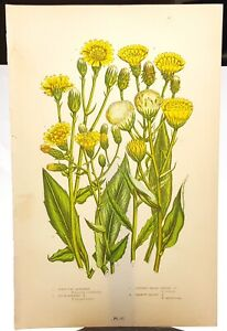 Great Britain Flowers 19th century colored print