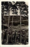 Calmbach Schwarzwald Postkarte 1966 gelaufen Blick vom Wald auf das Dorf Wald