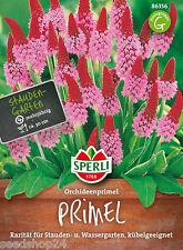 Orchideenprimel  Primula vialii Samen Saatgut Saat Profiqualität Schattenpflanze