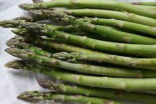 50 Samen Grünspargel Spargel ertragreiche Sorte Asparagus officinalis