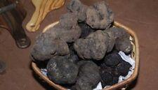 Precious black truffles fresh Mushrooms.From Italy (T.Aestivum) 190g. 6,7oz