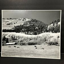 Cow Pasture Photography Poster Mr Overholt 1980s Vtg Wall Art Print