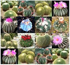 (20) ECHINOCACTUS SPECIES Mixed SEEDS - Golden Barrel Cactus - Combined S&H
