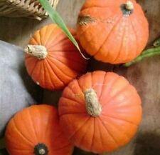 GOLDEN NUGGET MINI PUMPKIN - 15 seeds (HERITAGE)