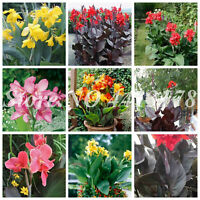 Exotic Canna Lily Seeds Plants Flore Outdoor & Bonsai Potted Indoor 200pcs/bag