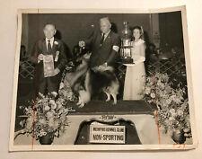 November 1970 Vintage Dog Show Press Photo Keeshond Memphis Kennel Club Jackpot