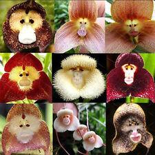 20Pcs Monkey Face Orchid Flower Seeds Home Rare Plant Seeds Bonsai Decor Beauty