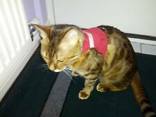 NEW LAND O BURNS BENGALS CAT WALKING JACKET RED VELVET with GOLD TRIM - SMALL