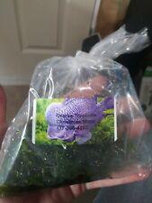 Christmas Moss - (Large Handful)