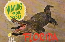Alligator Waiting For You in Florida, Beach, Crocodile Like Animal --- Postcard