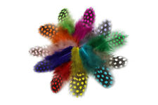 100pcs 11 mixed Colors Fly Tying Guinea Fowl Plumage Hackle Spotted Hen Material