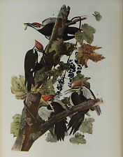 ANTIQUE 1937 AUDUBON PRINT - No. 111 PILEATED WOODPECKER - FREE SHIPPING !!