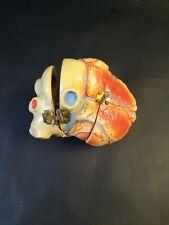 Medical Plastics Laboratory Heart Missing Pub Vintage Anatomical Model