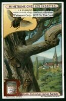 Insect Comouflage Punaise On A Tree c1915 Trade Ad Card