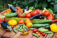 Greek Summer vegetables/greens seeds pack from Greece Heirloom Organic NON GMO