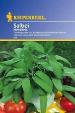 Salvia Kräutersamen