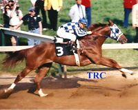 SECRETARIAT & RON TURCOTTE -ORIGINAL 8X10 1973 PREAKNESS STAKES PHOTO -THE LEAP!