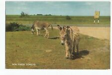 Postcard New Forest Donkeys Hampshire UP     (A30)