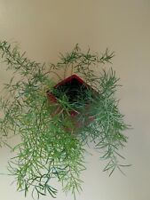 Wonderful Square Wall Planter, Ceramic, w protective liners, Red, New