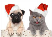 MOPS & KATZE: lustiges Weihnachtskarten-Set 5, 10, 15, 20, 30 oder 50 St.