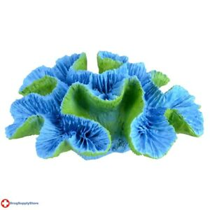 """RA Open Brain Coral - Blue - Large 6"""" x 4.75"""" x 2"""""""