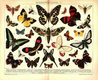 Lithographie Schmetterlinge von 1901 Illustration Bild Lithografie Nachtfalter