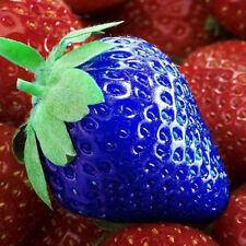 100pcs Blue Strawberry Seeds Vegetable Vitamin Fruit Plants Home Garden Decor