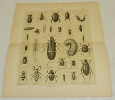 1877 Antique Print/COLEOPTERA BEETLES///a