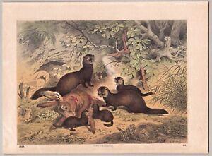 Wiesel und Hase - Farblithographie 1869 - signiert Votteler