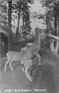 H48/ Camp Sherman Oregon RPPC Postcard 1961 Person Feeding Deer