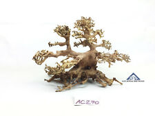 Bonsai Driftwood Tree for Aquarium Moss Fish Shrimp Planted Tank -Size M- AC270