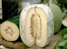 30 Seeds of Hairy Gourd , Winter-White Gourd, Winter Melon, Benincasa hispida,