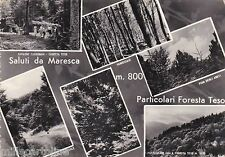 # MARESCA: PARTICOLARI FORESTA TESO