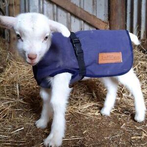 AniMac Canvas Lamb Coat | Kid | Cria | Small Dog | Showerproof | Breathable