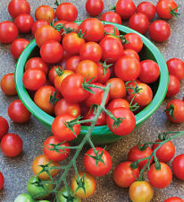 Delicios & Naturally Piccolo Cherry Tomato* 50-Finest Seeds*Sweet & Juicy*