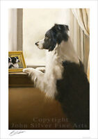 BORDER COLLIE DOG PORTRAIT by JOHN SILVER. SIGNED A4 or A3 SIZE PRINT BC324SP