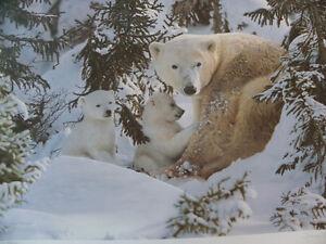 Polar Bear Print - Stephen Townsend - Ltd.Edn. 492/675