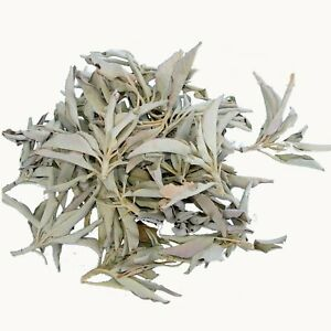 White Sage loose 100 Gram Cluster Premium Quality (White Sage) dried, from Calif