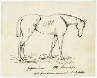 1851 | lovely original pen and ink sketch of horse | Benares India | 'Jessamine'