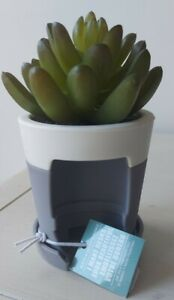 Succulent Desk Top PB Dispenser By Bath And Body Works *NEW*