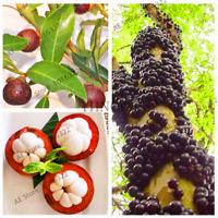 10 PCS Seeds Mangosteen Fruit Bonsai Organic Plants Tree Garden Tropical 2019 N
