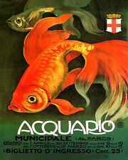 "RED FISH AQUARIUM ITALY ITALIA ITALIAN FINE 8"" X 10"" POSTER REPRO FREE SHIPPING"