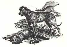 Irish Wolfhound - 1964 Dog Art Print - Matted